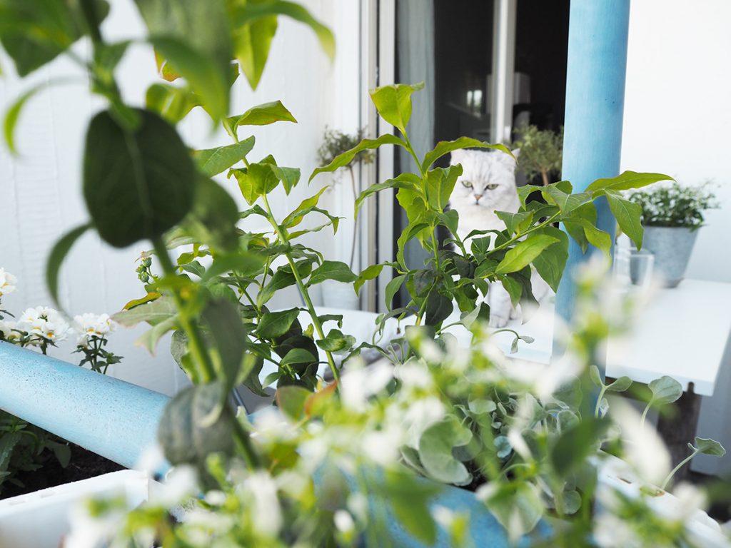 Sommerzimmer - Balkon 3